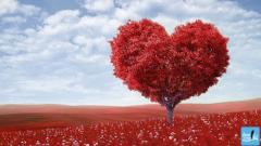14 Şubat Sevgililer Günü Ne Kadar Popüler?