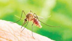 Koronavirüsü, sivrisinek yoluyla bulaşır mı?
